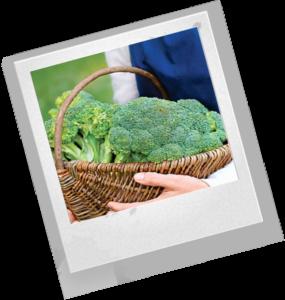 полезные блюда из брокколи