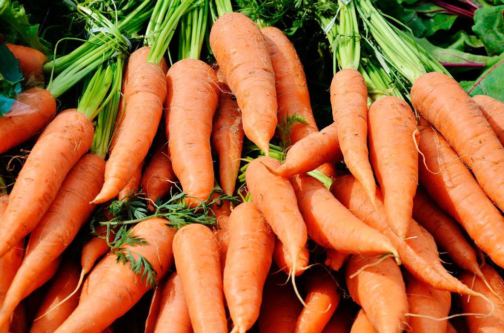 польза и вред от моркови