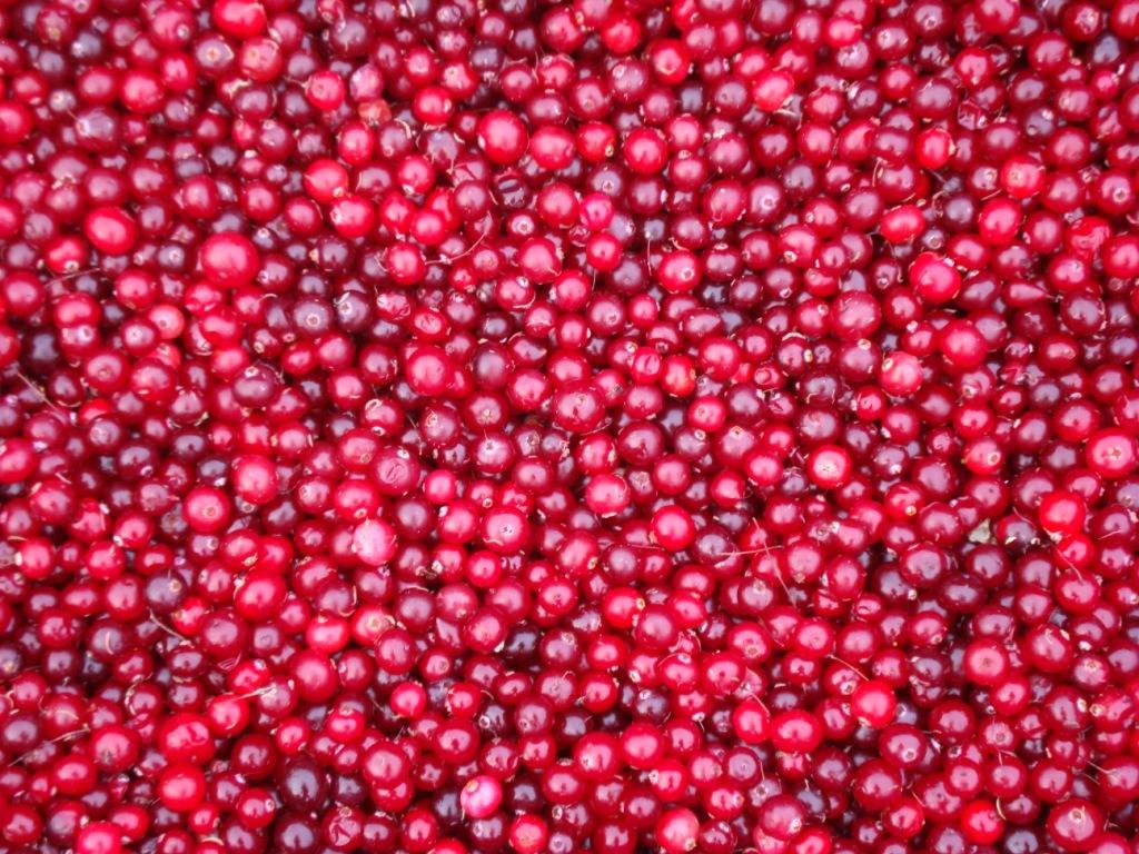 польза клюквы и других ягод